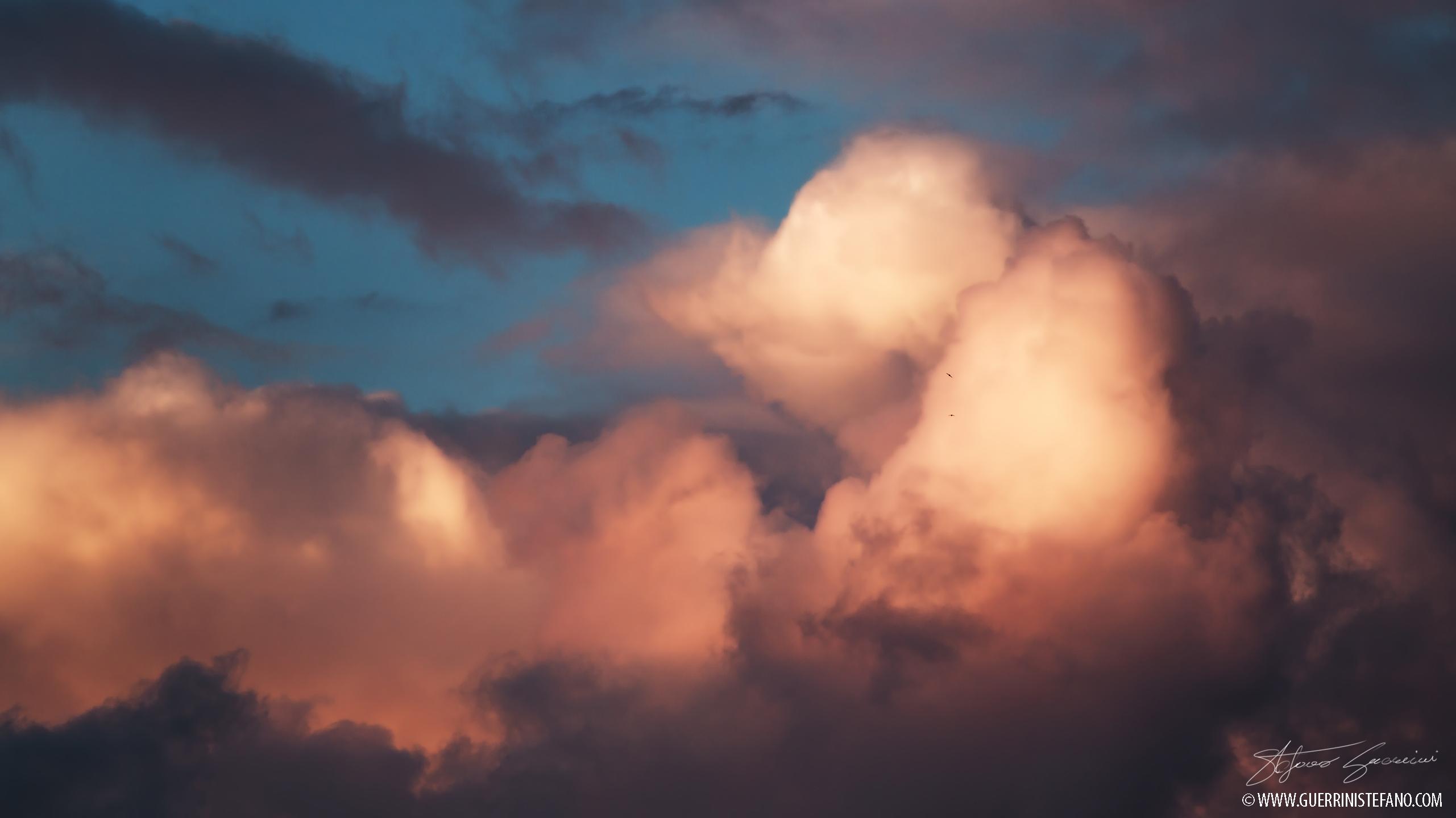 rondini-al-tramonto-rid-by-guerrini-stefano