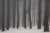 alberi-nebbia-1000px-by-guerrini-stefano