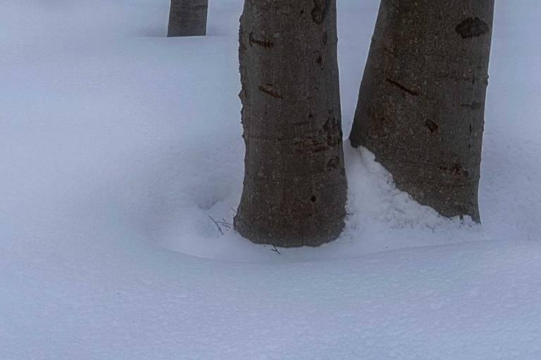 faggi-difetto-cromatico-neve-1