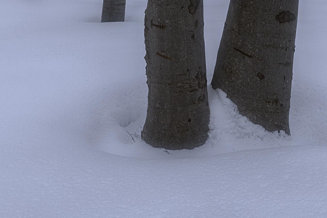 Faggi-difetto-cromatico-neve-2.jpg